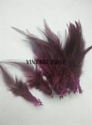 Перо фазана, винный